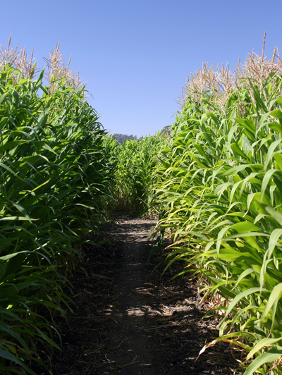 agritourism-insurance-corn-maze-insurance