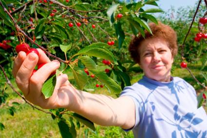Cherry Picking Insurance