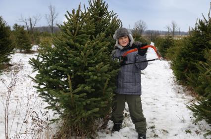 Christmas Tree Farm Lot Insurance Program