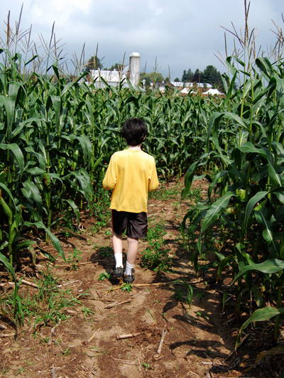 corn-maze-insurance-agritainment
