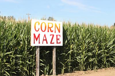 Corn Maze Insurance Program