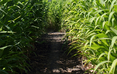 Haunted Corn Maze Insurance