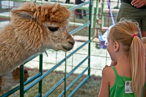 petting zoo insurance