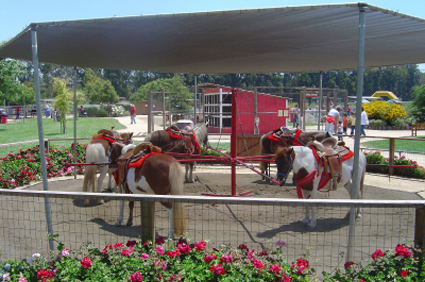 Pony Ride Insurance