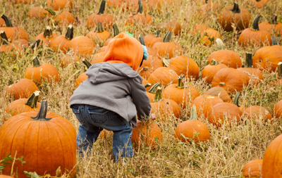 pumpkin farm insurance iowa
