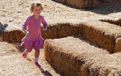 pumpkin farm insurance kansas