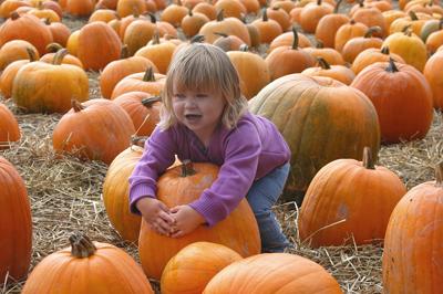 Pumpkin Patch Insurance Program